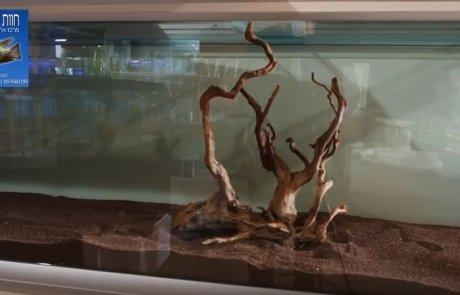 צילום מתוך הסרטון - אקווריום צמחייה למכירה