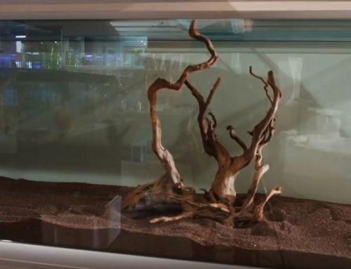 אקווריום 2 מטר לצמחייה