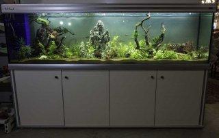 אקווריום 2 מטר - צמחיה ודגי להקה - צילום של האקווריום והסטנד
