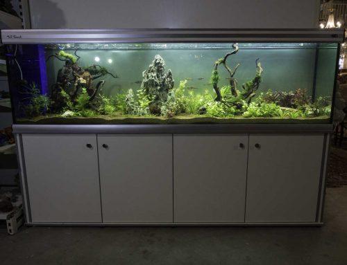 אקווריום 2 מטר – צמחיה ודגי להקה