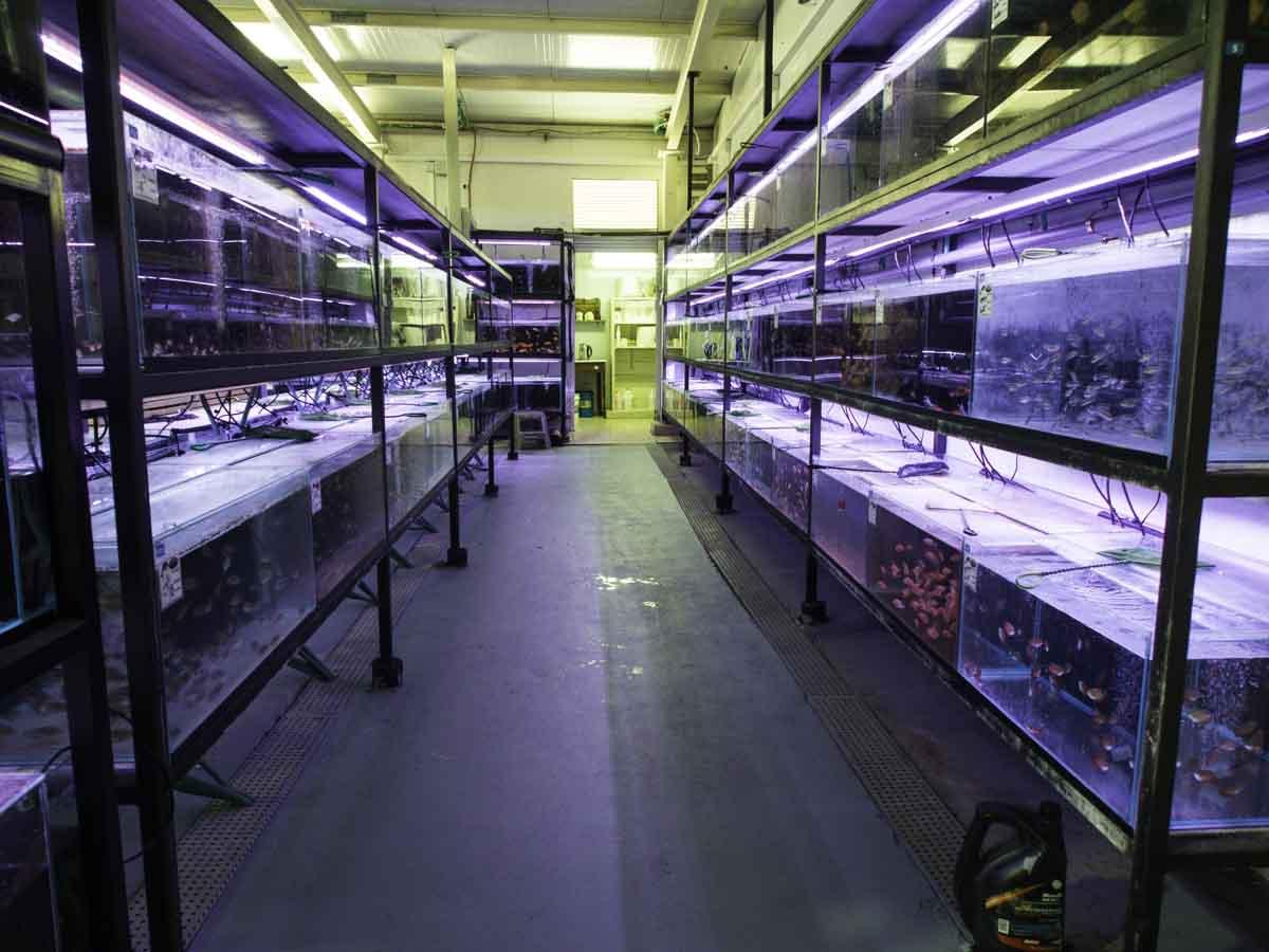 תמונה של אקווריומים עם דגים מבית האריזה
