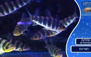 לפורינוס, תמונה מתוך הסרטון