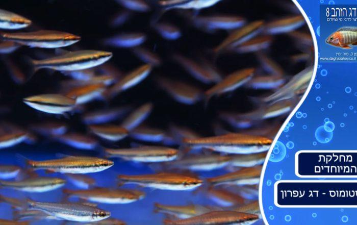 דג עפרון - צילום מתוך הסרטון