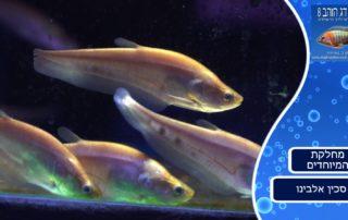 דג סכין אלבינו, צילום מתוך הסרטון